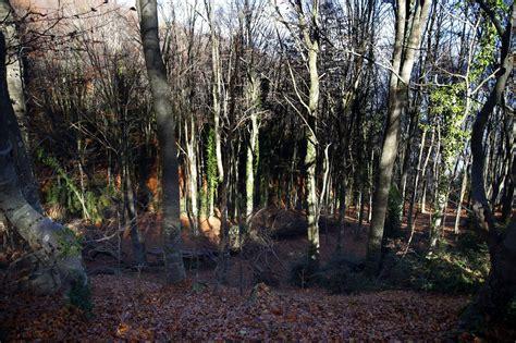 Bosque mediterráneo: nuevas amenazas; nuevas formas de gestión