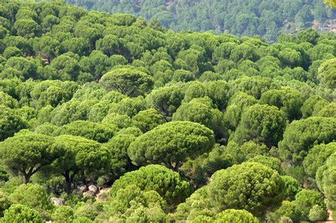 Bosque perennifolio: características, adaptación y clima ...