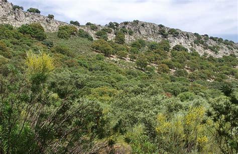 Bosque y matorral mediterráneos