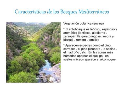 Bosques mediterráneos