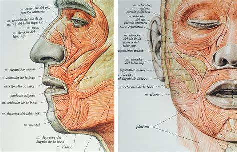 Botox para elevar la comisura de los labios | Doctora ...
