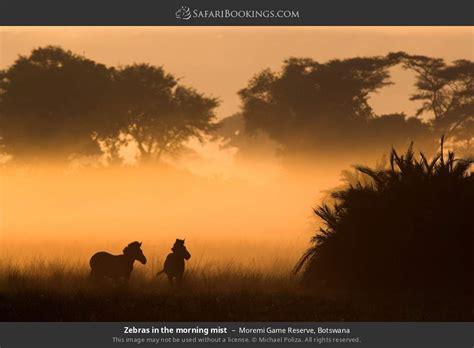 Botswana Dry Season Photos – Award Winning Images & Pictures!
