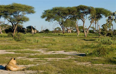 Botswana Wet Season Photos – Award winning images & pictures!