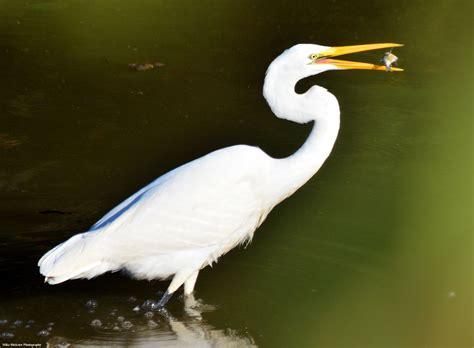 Bottom s Up   Coastal birds, Avian, Long legs