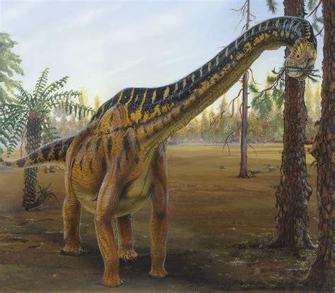 Brachiosaurus   Dinosaur Wiki