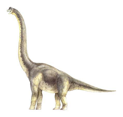 Brachiosaurus  Lagarto Brazo  Jurásico Superior ...
