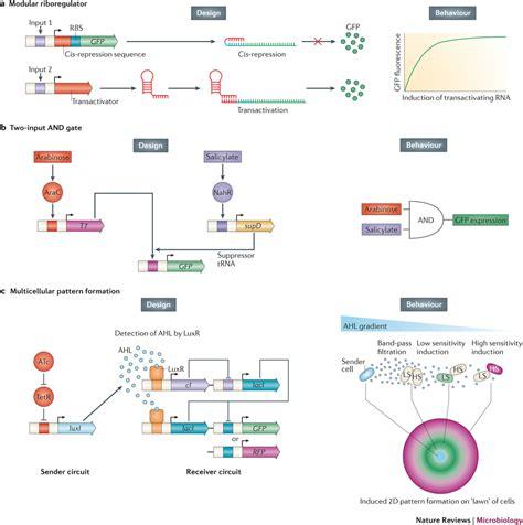 Breve historia de la biología sintética   La Ciencia de la ...