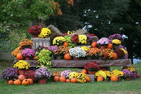 Bright Fall Garden Design and Natural Yard Lndscaping Ideas