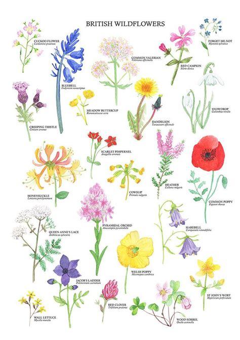 British Wildflowers Print   Wildflower Art Poster ...