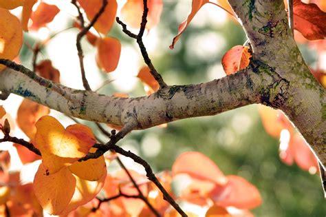 broken tree branch   Google Search | Trees | Tree ...