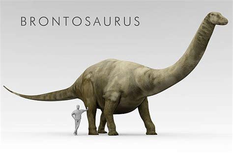 Brontosaurio   Banco de fotos e imágenes de stock   iStock