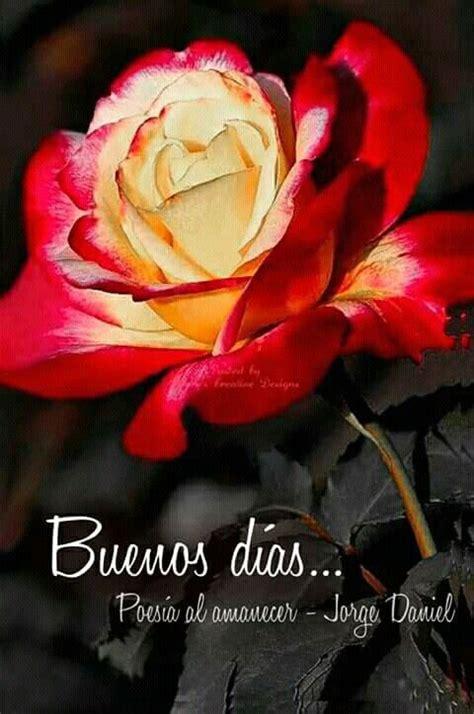 Buen día con rosa   Buenos dias con rosas, Imágenes de ...