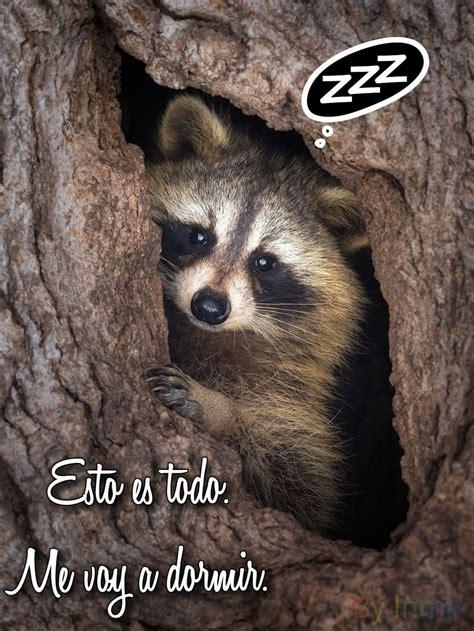Buenas Noches imágenes divertidas 540   BonitasImagenes.net