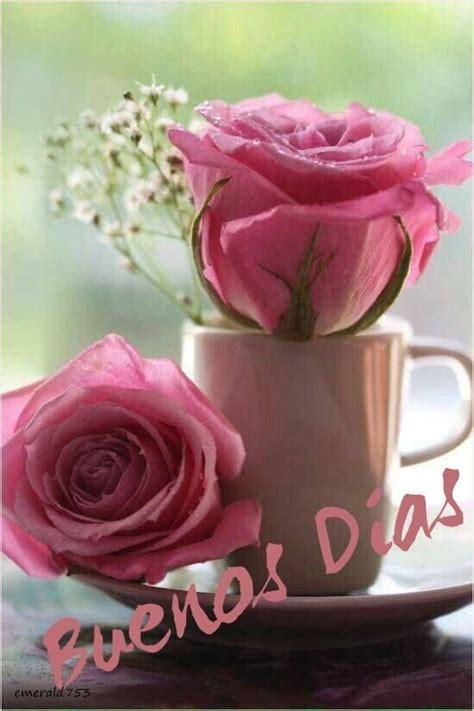 Buenos dias | Buenos dias con flores, Rosas, Flores bonitas