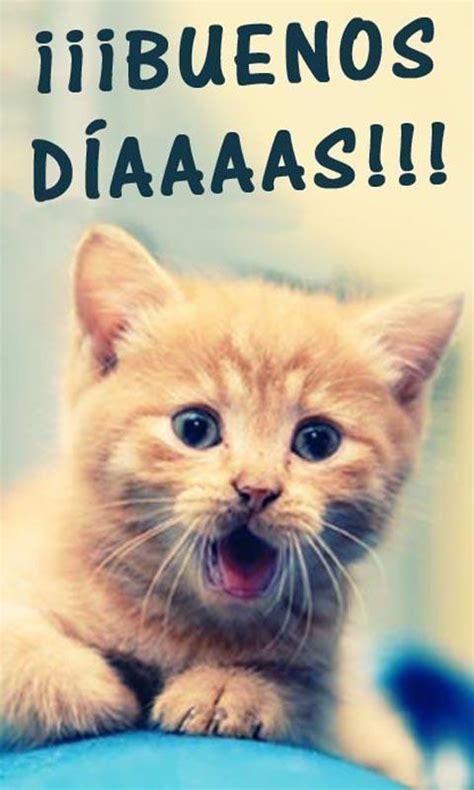 Buenos Dias Cute Cat Image
