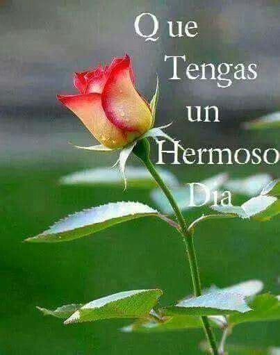 Buenos dias | Rosas, Buenos dias con flores y Flores bonitas