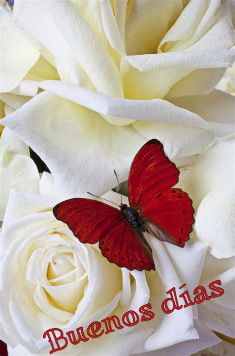 Buenos días  With images  | Red butterfly, Beautiful ...