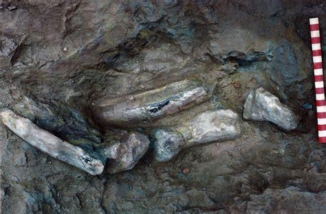 Buscando dinosaurios en Soria   SoriaNoticias