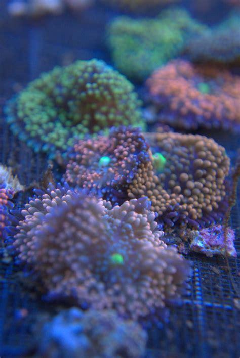 Buy Aquarium Fish from Harvest Bounty Enterprises, United ...