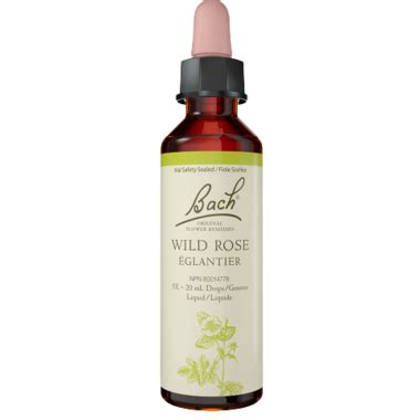 Buy Bach Wild Oat Flower Essence at Well.ca | Free ...
