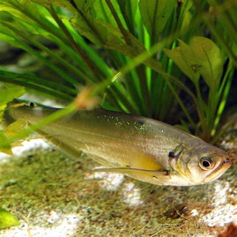 Buy Colorful Tropical Fish Online & Exotic Freshwater Fish ...