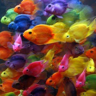 buy sell cheap best aquarium chandigarh panchkula mohali ...