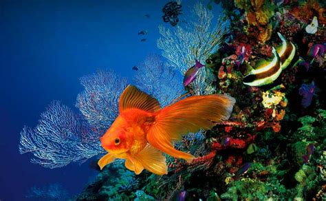 Buy the Stunning & Coolest Fish for Your Tropical & Marine ...