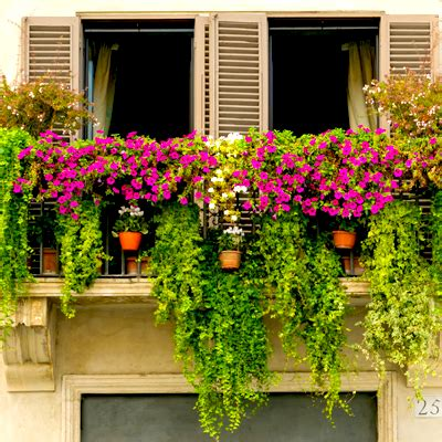 Buy top 10 plants for terrace balcony online at Nursery ...