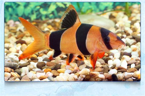 Buy tropical fish at Lynchford Aquatics in Farnborough.