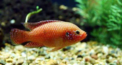 Buy Tropical Fish Online – Aquarium Tips