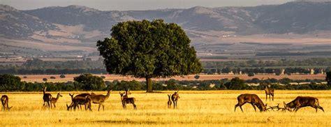 Cabañeros   Parques Naturales   Recomendaciones   España ...