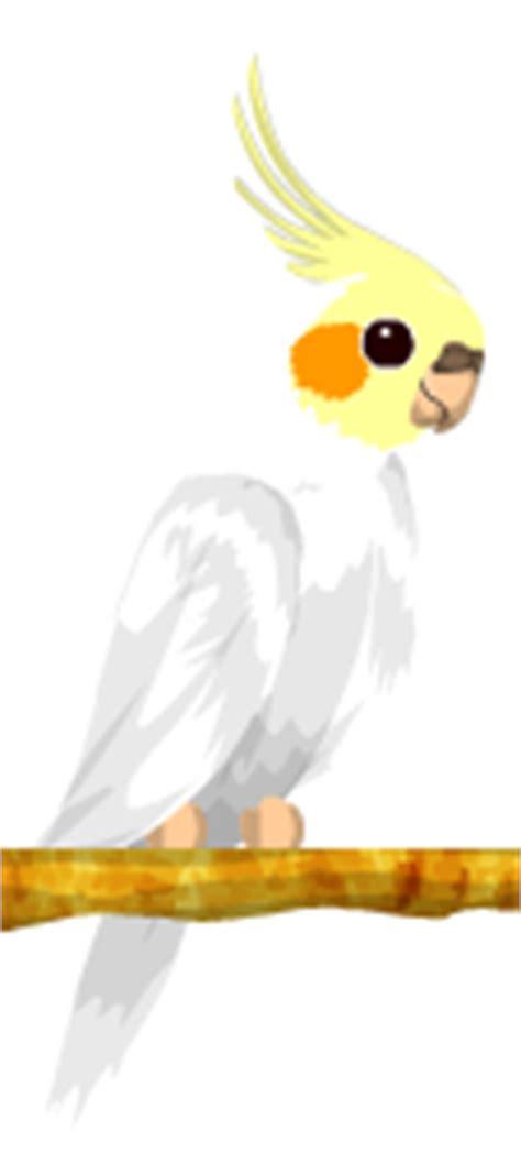 Cacatúa Ninfa Blanca | BirdLand Wiki | Fandom powered by Wikia
