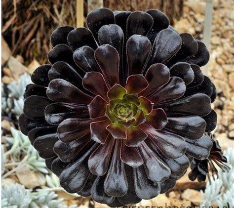 cactus flores   Buscar con Google | suculentas | Pinterest ...