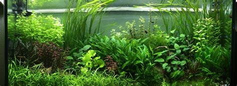 CAD creative aquarium design: El acuario low tech, el ...