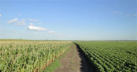 Cada vez más soja por maíz   Agritotal