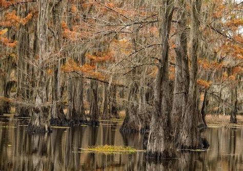 Caddo Lake Tours and Canoe Rentals  Uncertain    2020 All ...