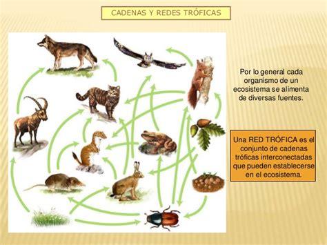 Cadena alimenticia – Clases con el profesor Rodrigo Carrero