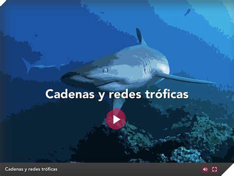 Cadenas y redes tróficas   Descubriendo Galápagos