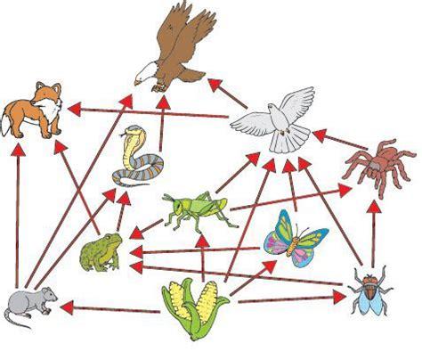 Cadenas y redes tróficas   Escolar   ABC Color