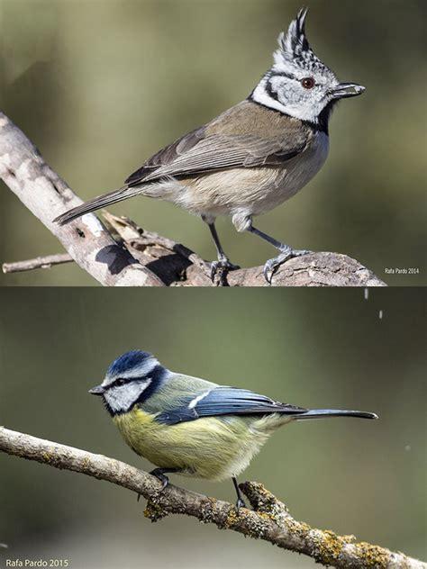 Caja Aves Insectívoras Grande   La Granja de Bitxos