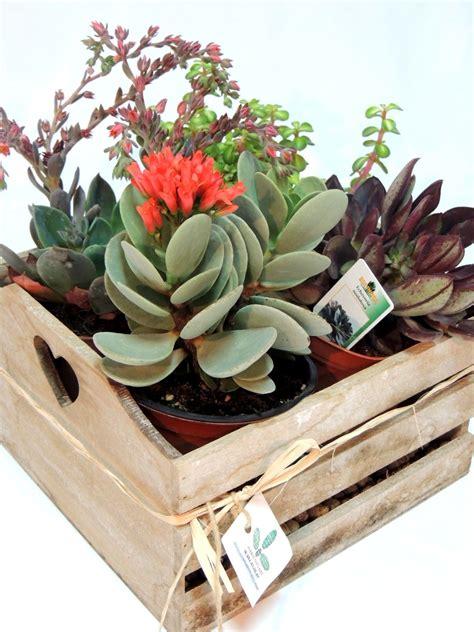Caja de madera decorada con una selección de suculentas ...
