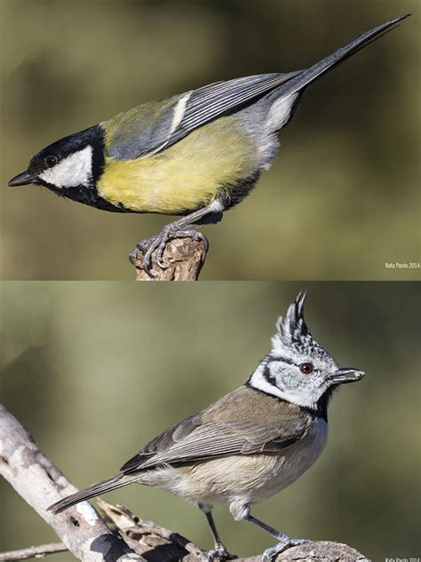 Caja Nido Aves Insectívoras   La Granja de Bitxos