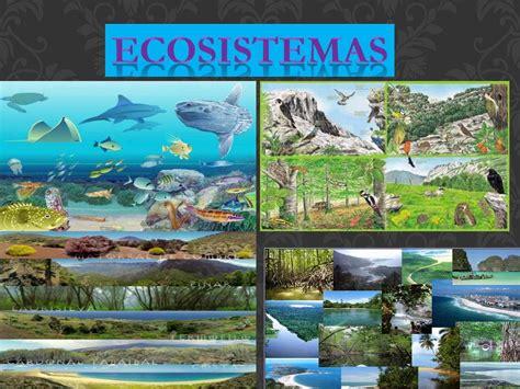 Calaméo   Ecosistemas ENOC