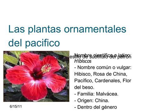 Calaméo   las plantas ornamentales del pacifico