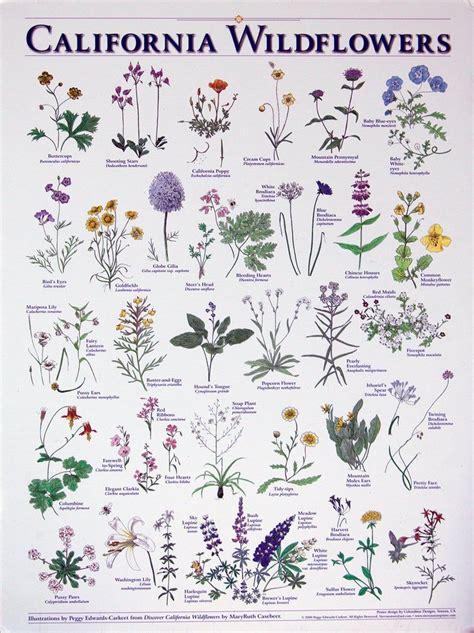 California Wildflowers print | Etsy in 2020 | California ...