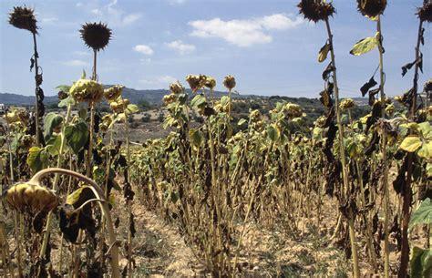 Cambio climático: el desafío para la agricultura española ...