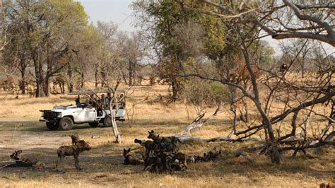 Camp Moremi, Botswana   Natural World Safaris