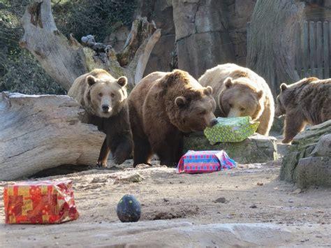 Campamentos urbanos navideños en el Zoo de Madrid