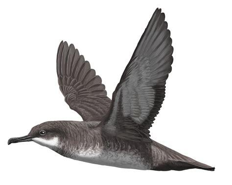 Campaña 'Aves y fauna marina amenazada del Mediterráneo ...