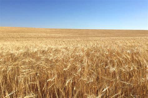 Campo Manchego | Agricultura Finca quesería Las Terceras ...